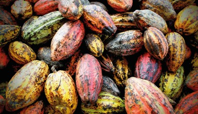 Cacao-Trace: for a shared value from cocoa bean to chocolate